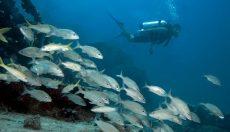 Shoal Bay Scuba