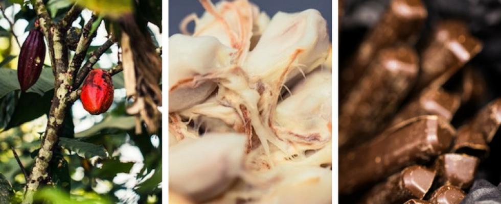 """Résultat de recherche d'images pour """"new cocoa industries, 2017, 2018"""""""