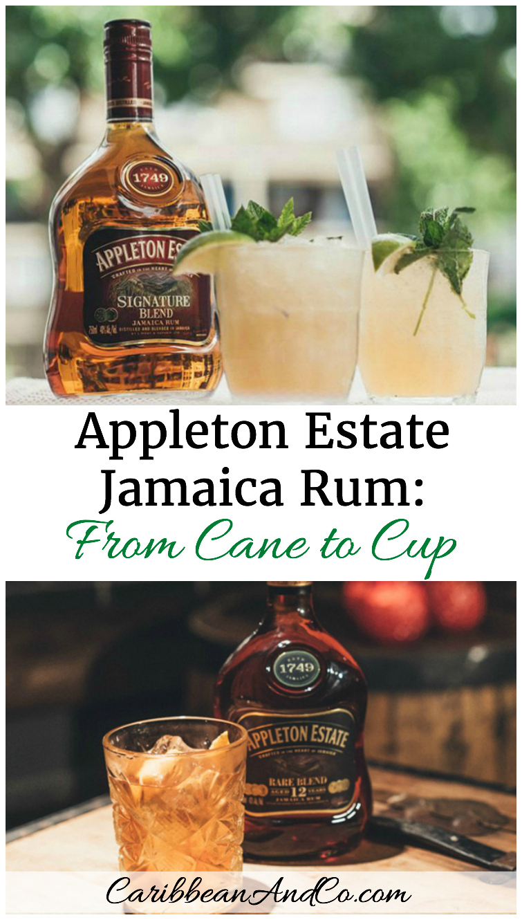 Appleton Estate Jamaica Rum From Cane to Cup