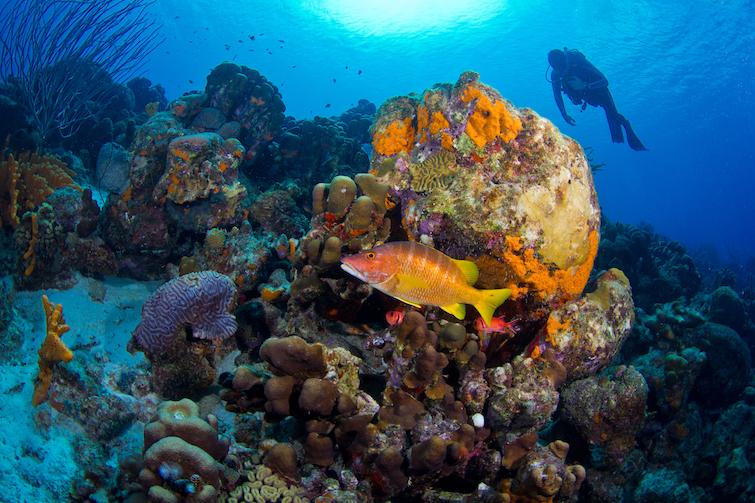 Bonaire: Diving Site. Photo Credit: © Tourism Corporation Bonaire.