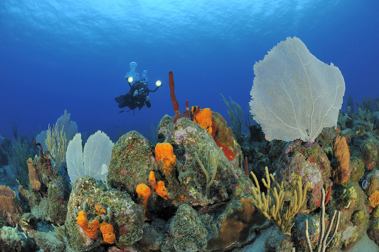 Saint Eustatius: Diving Site. Photo Credit: ©St Eustatius Tourism Development Foundation.