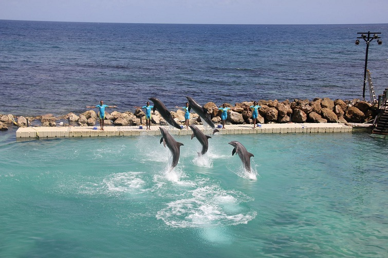 Jamaica: Dolphin Cove