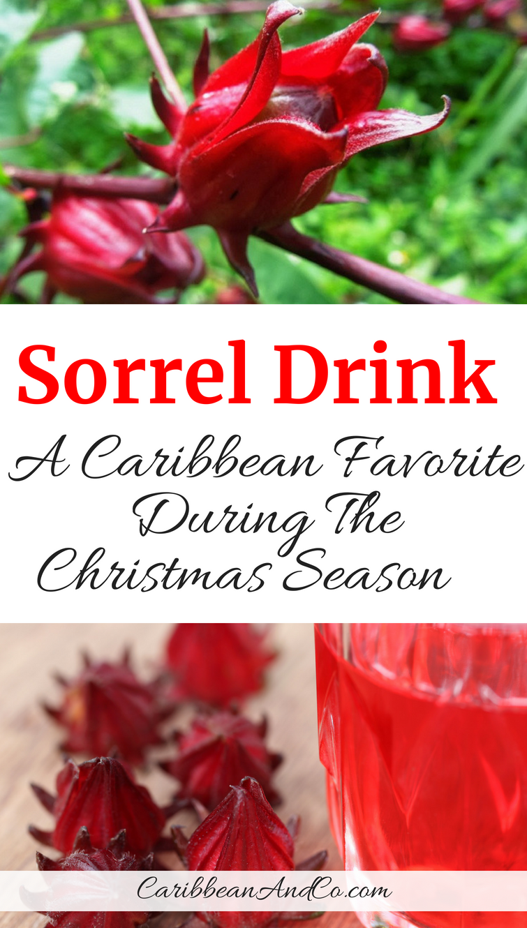 Find out about the history and origins of sorrel drink, one of the more traditional and festive beverage in the Caribbean at Christmas. #SorrelDrink #ChristmasDrink