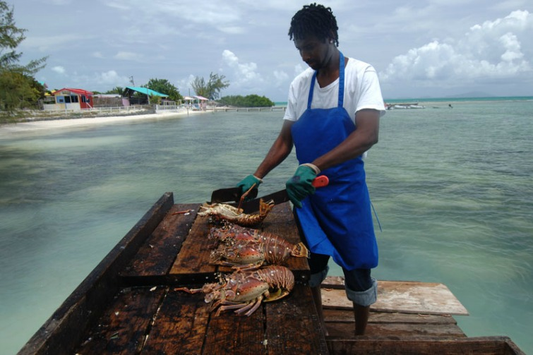 British Virgin Islands: Preparing lobster for grilling at Anegada Beach