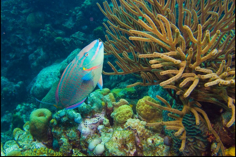 The mesoamerican barrier reef caribbean s largest marine for Show me pictures of fish