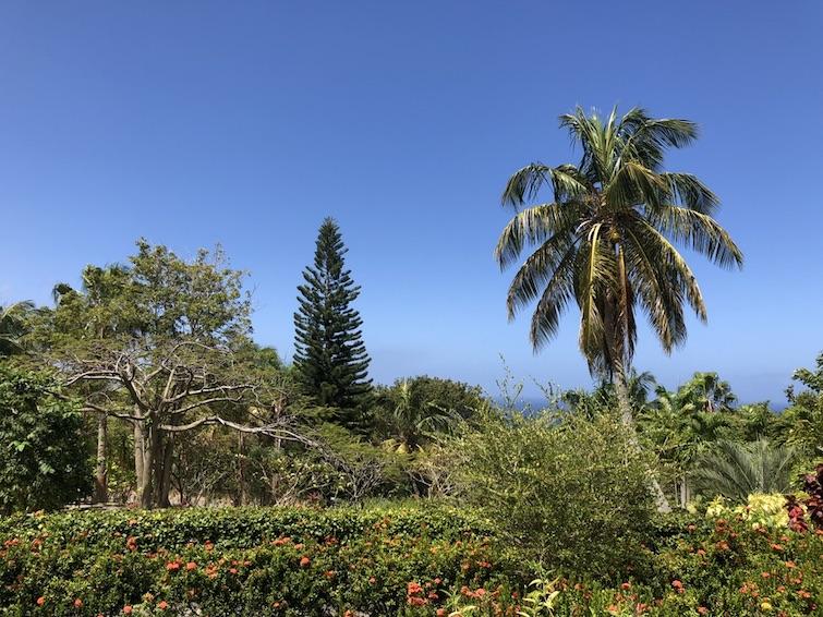 Montserrat National Trust: Botanical Garden. Photo Credit: © Ursula Petula Barzey.