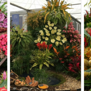 RHS Chelsea Flower Show 2015