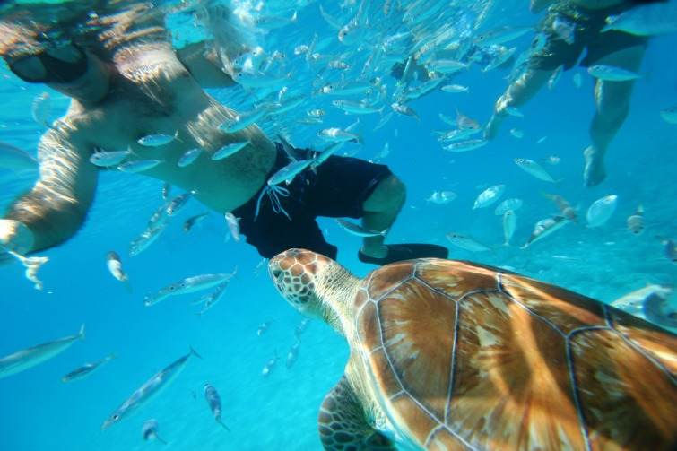 Royal Caribbean Turtle Encounter And Island Tour