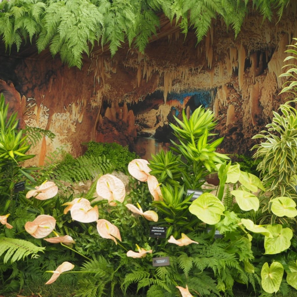 Barbados & Grenada Win Gold at 2016 RHS Chelsea Flower Show