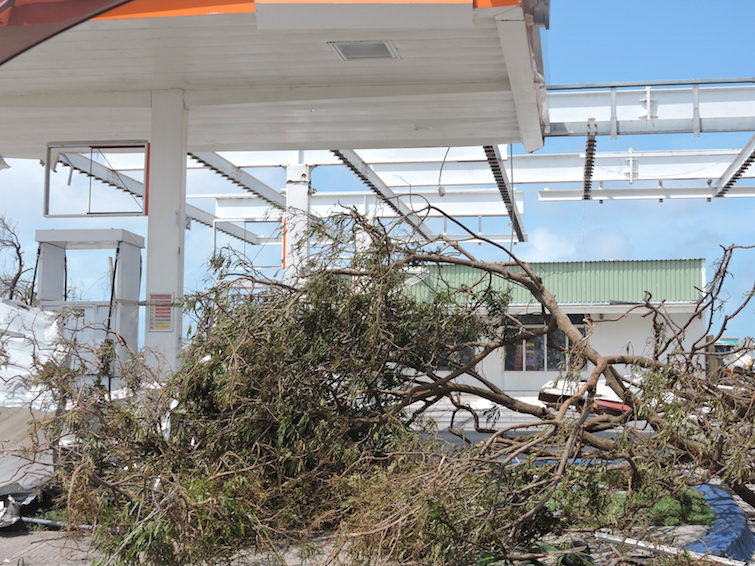 Anguilla: Downed trees from Hurricane Irma.