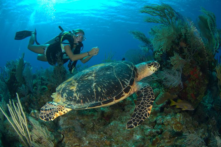 Cayman Island: Diver with a massive green sea turtle. Photo Credit: © Cayman Islands Department of Tourism.