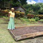 Grenada: Belmont Estate - Walking The Cocoa.