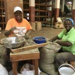 Grenada: Gouyave Nutmeg Processing Station - Two women sorting and grading nutmeg.