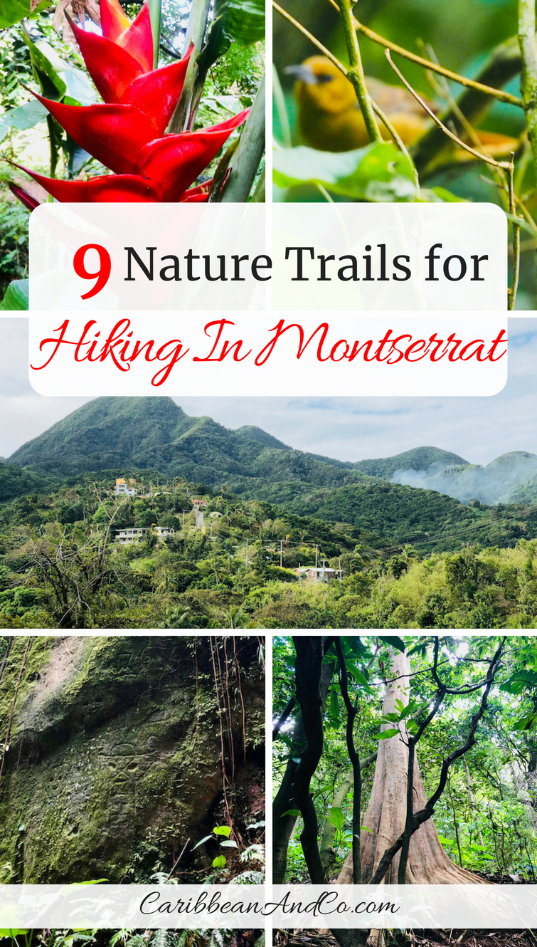 Find out the about the 9 official natural trails for hiking in Montserrat, the Emerald Isle of the Caribbean which is a nature lovers paradise. #Montserrat #VisitMontserrat #NatureTrails #Hiking