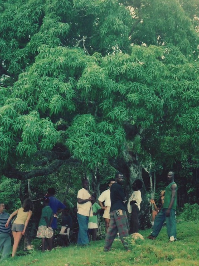 Historic sites in Jamaica: Kindah Tree of Accompong near where the Maroons signed their treaty with the British in 1739. Photo Credit: © Angra via Wikimedia Commons.