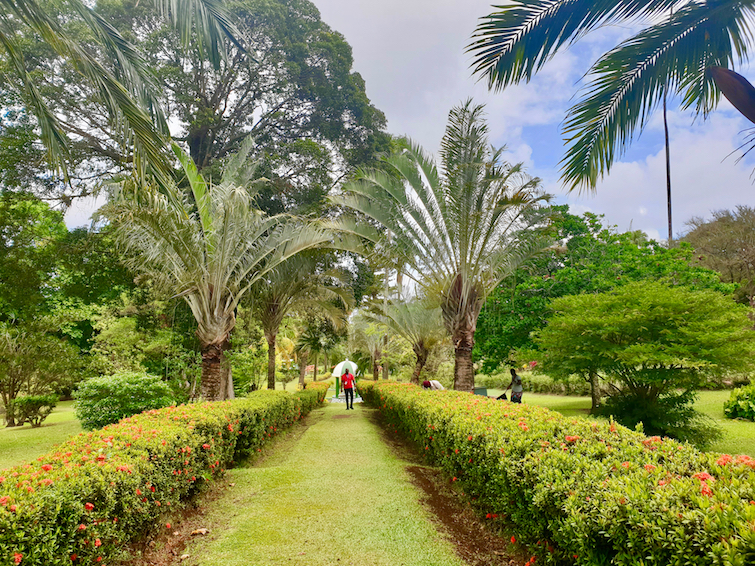 The Walkway at the Botanical Gardens in Kingstown, St Vincent.
