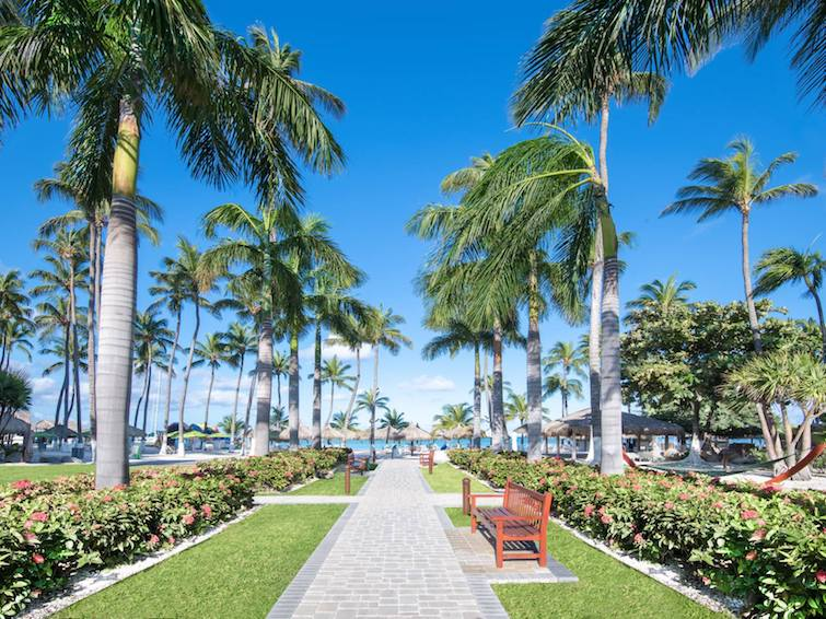 Palm lined pathway at Holiday Inn Resort Aruba Beach Resort & Casino. Photo Credit: © IHG.